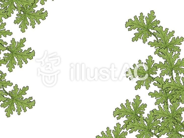 ゼラニウム 葉