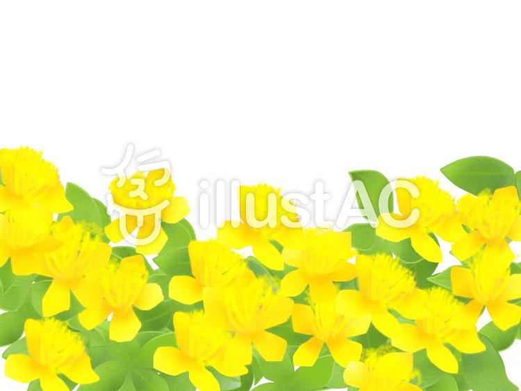 ビヨウヤナギの画像 p1_6