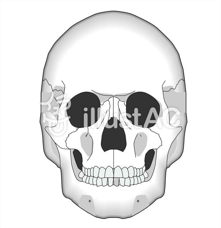 頭蓋骨 イラスト フリー