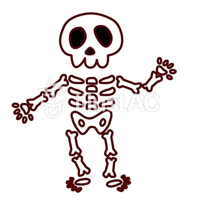 骸骨の画像 p1_14