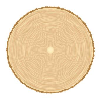 Log annual ring