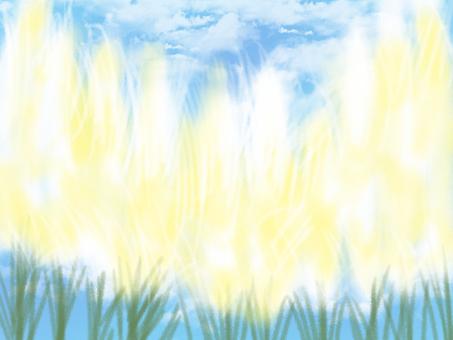 Blue Sky Pampasgrass