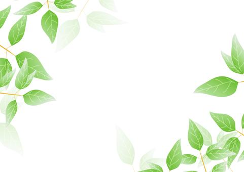 Green frame 13