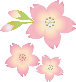 벚꽃의 꽃 봉오리와 꽃