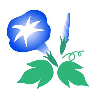 파란 나팔꽃 일러스트