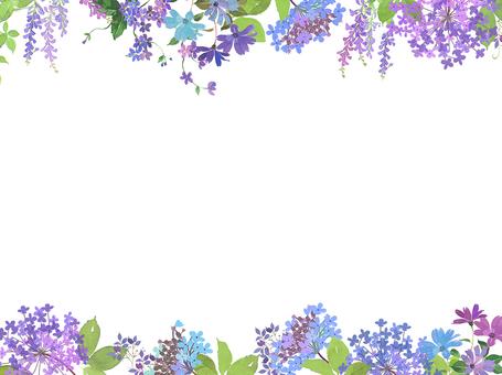 Hana hydrangea border