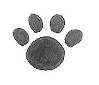 Footprints of animals footprint