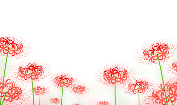 群集孤挺花