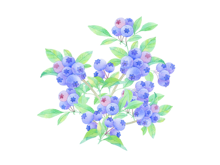 Blueberry ★ 0380-F