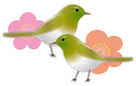 飛梅와 휘파람새