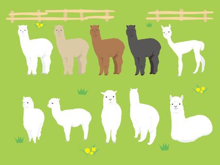 Alpaca set