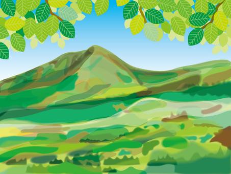 신록의 초여름의 산 (2)