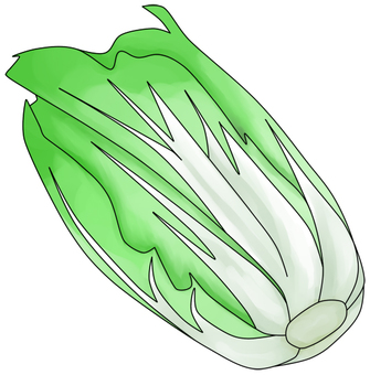 Chinese cabbage (with wire)