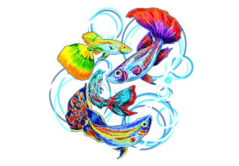 Tropical Fish C