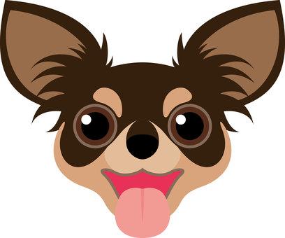 Dog breed Chihuahuas