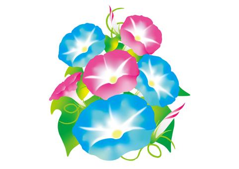 나팔꽃 NO.2 2 색 하늘색 넉넉