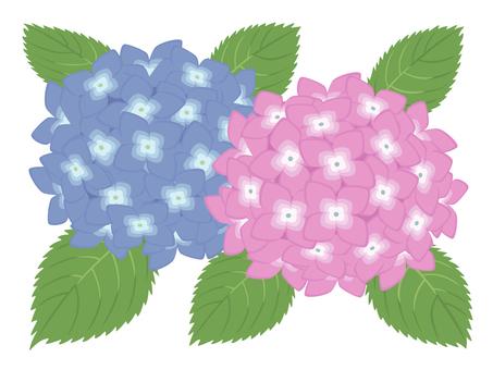 Hydrangea (hydrangea)