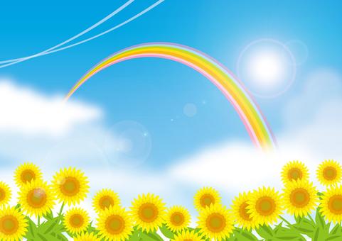 Rainbow and blue sky and sunflower