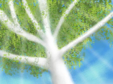 유칼립투스 나무