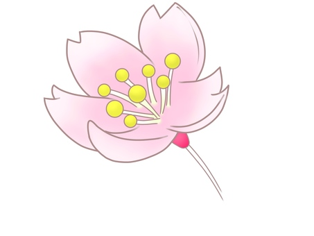 Illustration of cherry blossom viewed from diagonal