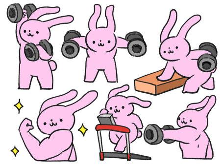Rabbit training at the gym