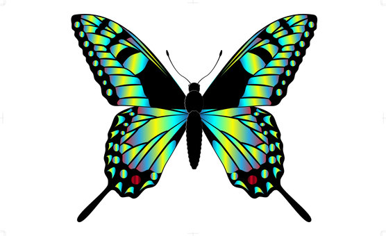 Illustration of a swallowtail butterfly