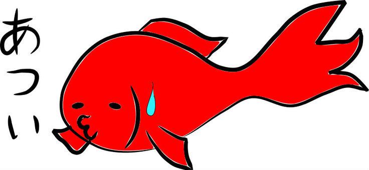 Hot goldfish