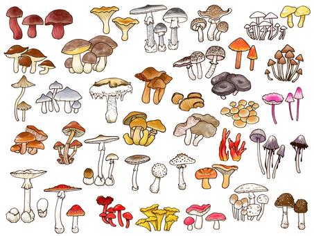 Plenty of poisonous mushroom harvest