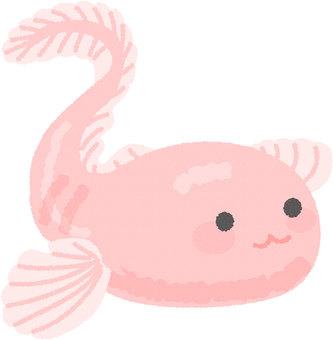 Shin Kai Shrimp
