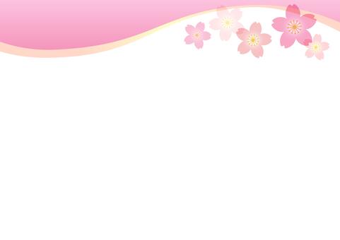 Cherry blossoms 221