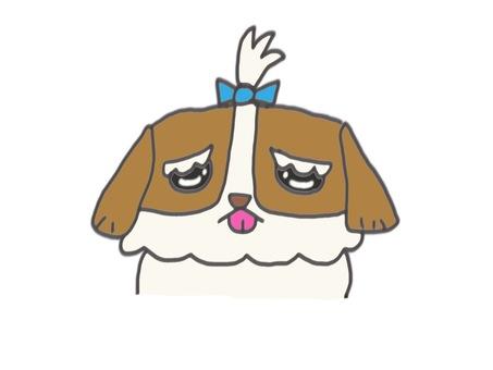 Dog Shih Tzu