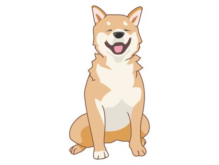 動物-柴犬