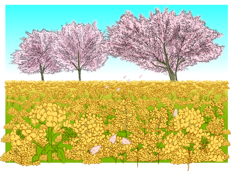 Cherry blossoms and rape blossoms
