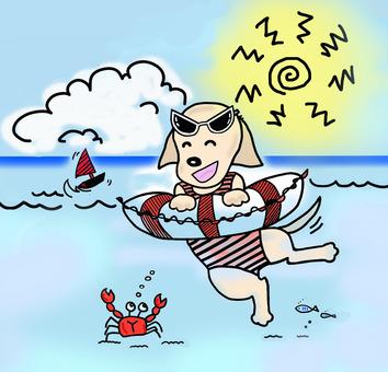 Dog of the sea bathing