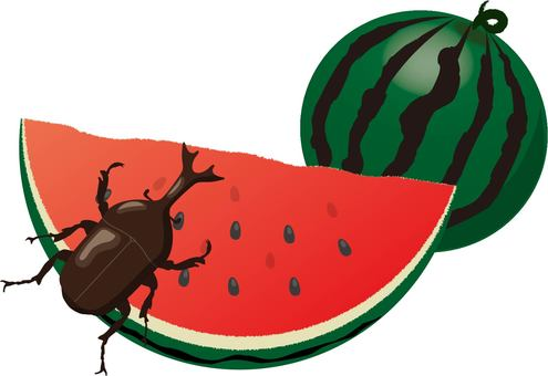 Watermelon beetle