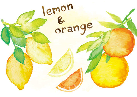 Watercolor style lemon orange
