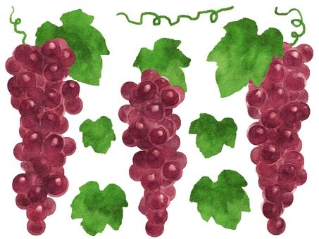 Watercolor style grape 2
