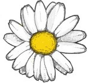 Daisy's flower / white