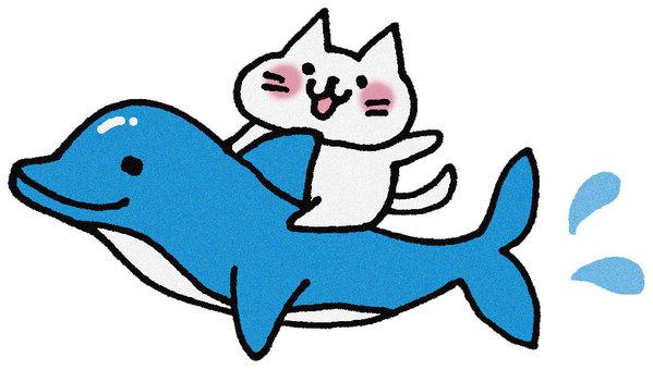 Dolphin cat
