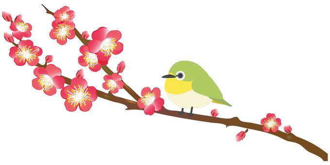 Mejiro and plum blossoms
