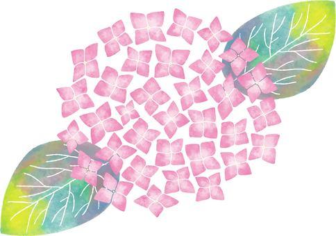 꽃 03_05 (수국 핑크)