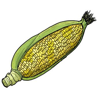 Corn / Sweet corn