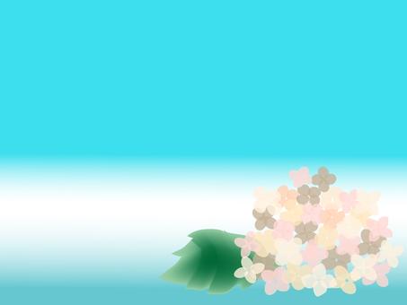 Hydrangea hydrangea