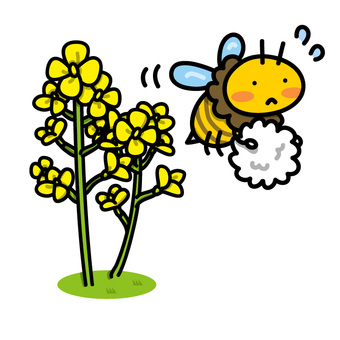 Illustrations of rape flowers and bees