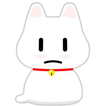 Shiro chan