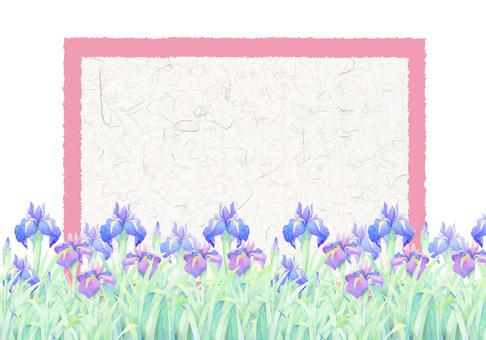 A card full of irises ★ 0082 - F