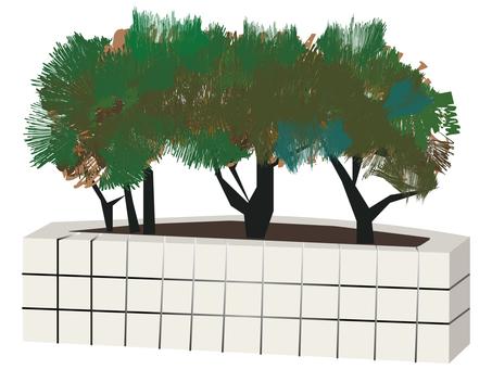 Street tree (?)