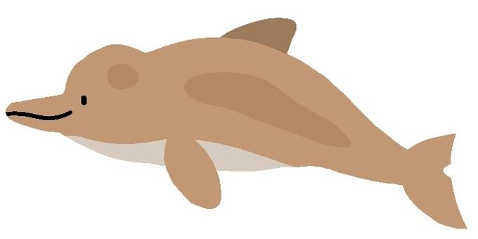 양쯔강 돌고래