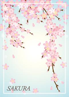 Sakura branch with sakura characters