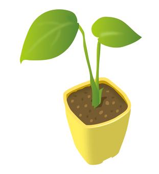 Plant mini
